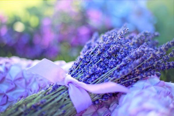 就活の疲れを癒やす香り、元気をつける香りなど、就活でおすすめのアロマオイルをアドバイス。画像はラベンダーの花束です。